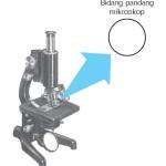 Bidang Pandang Mikroskop