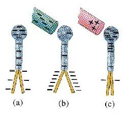 Elektroskop Diberikan Muatan Pertama Kali