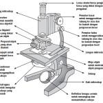 Bagian-Bagian Mikroskop Dan Cara Penggunaannya