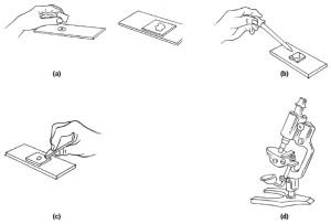 Cara Meletakkan Objek pada Kaca Preparat