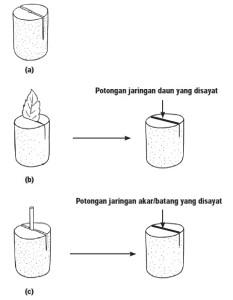 Cara Membuat Preparat Sederhana