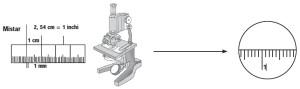 Cara Mengukur Melalui Mikroskop